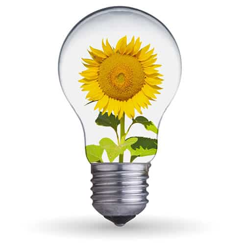 A sunflower growing in a lightbulb